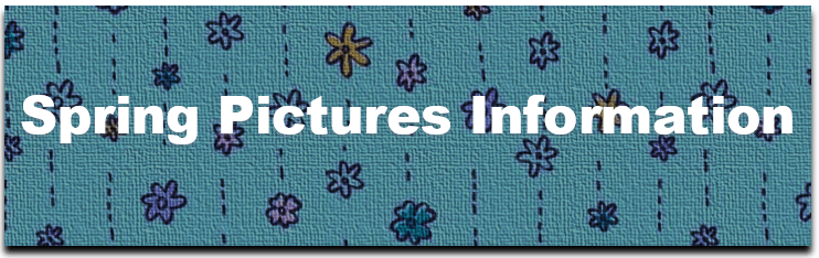 Spring Pictures Information Image