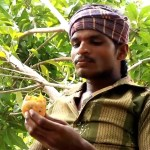 Mango Sellers Malda