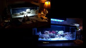 The Evolution of a reef tank