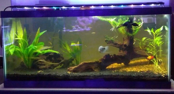 40 breeder freshwater.jpg