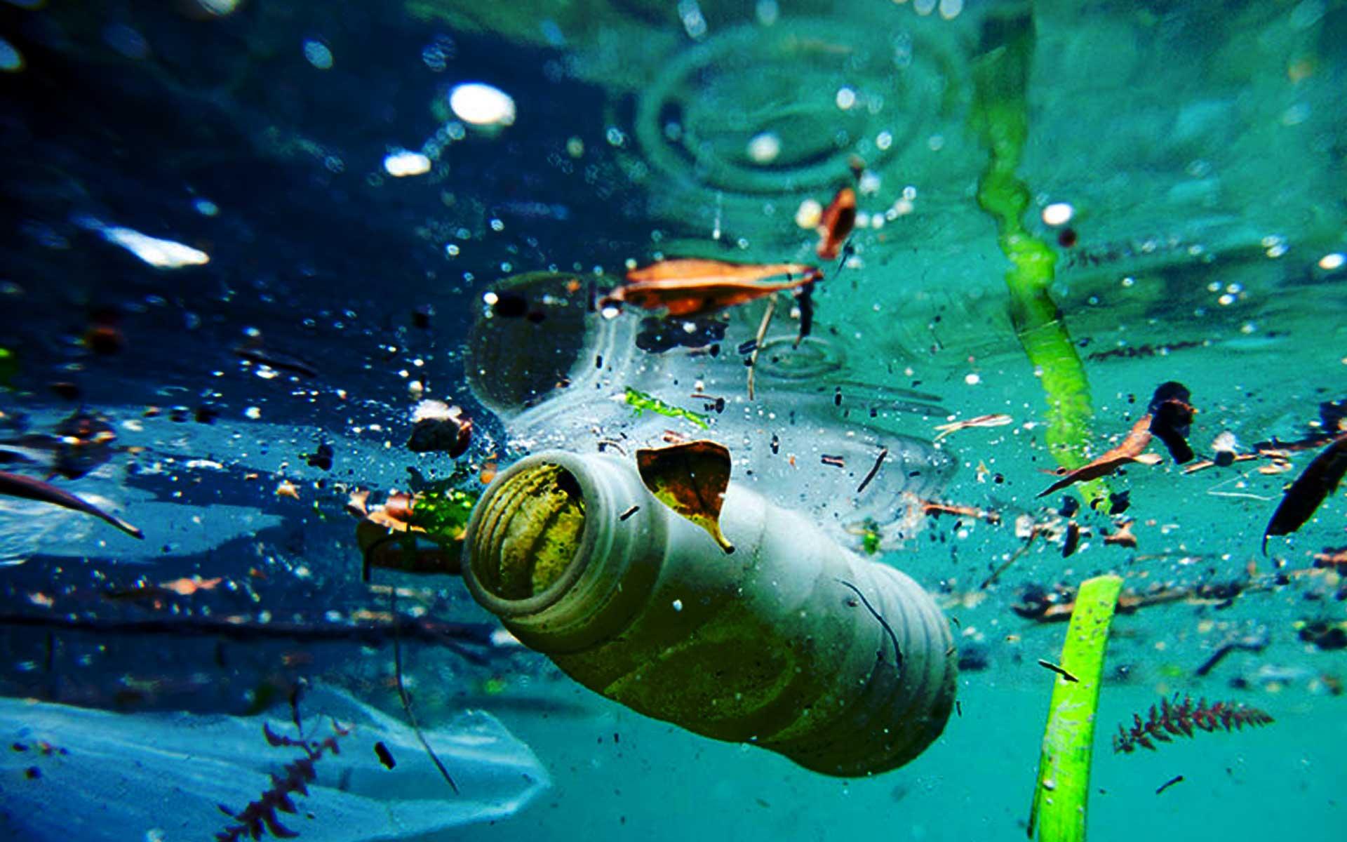 Marine Life Eating Plastic