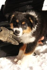 Future Avalanche Dog