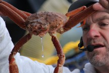 Young King Crab