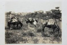 IMG_1953 small