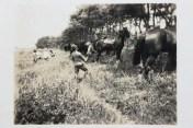 IMG_1959 small