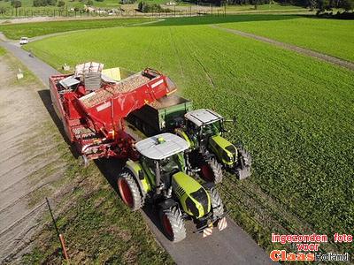 Zwiebeln ernte im Schweiz.  Uien oogst in Zwitserland.