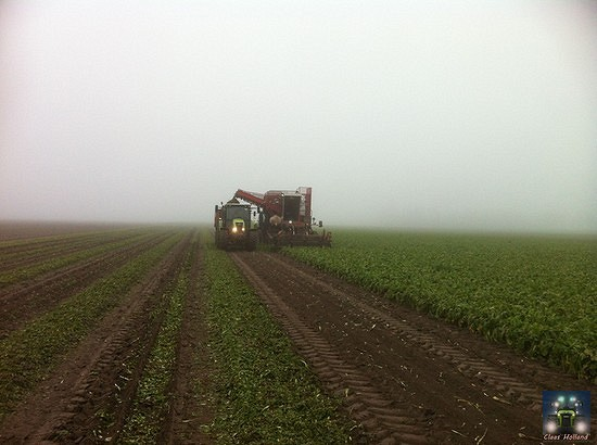 Van Dun aan het witlof rooien in de mist, uit het jaar 2013