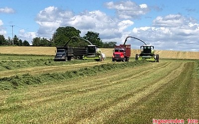 Claas Jaguar 980 and 990 in Grass-silage