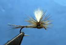 Parachute-Adams-Fly-Tying-Video