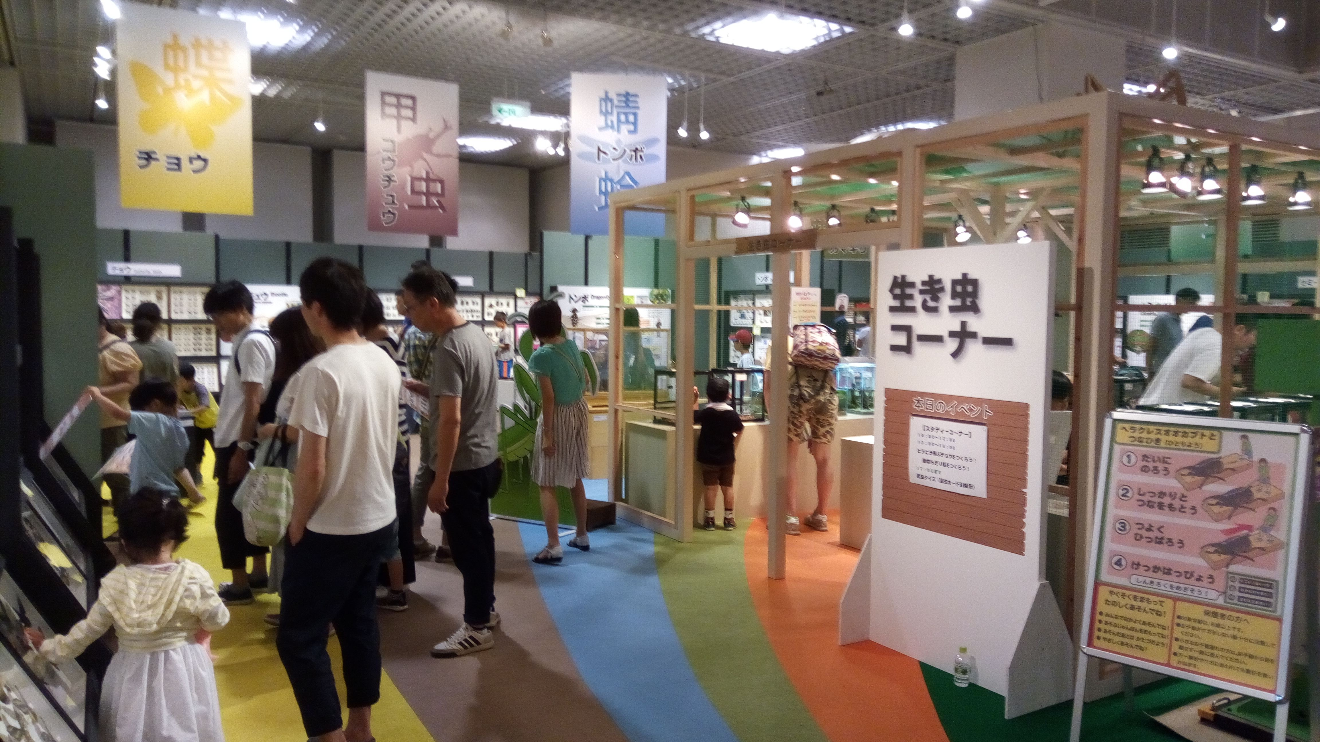 昆虫大集合 茨城県自然博物館