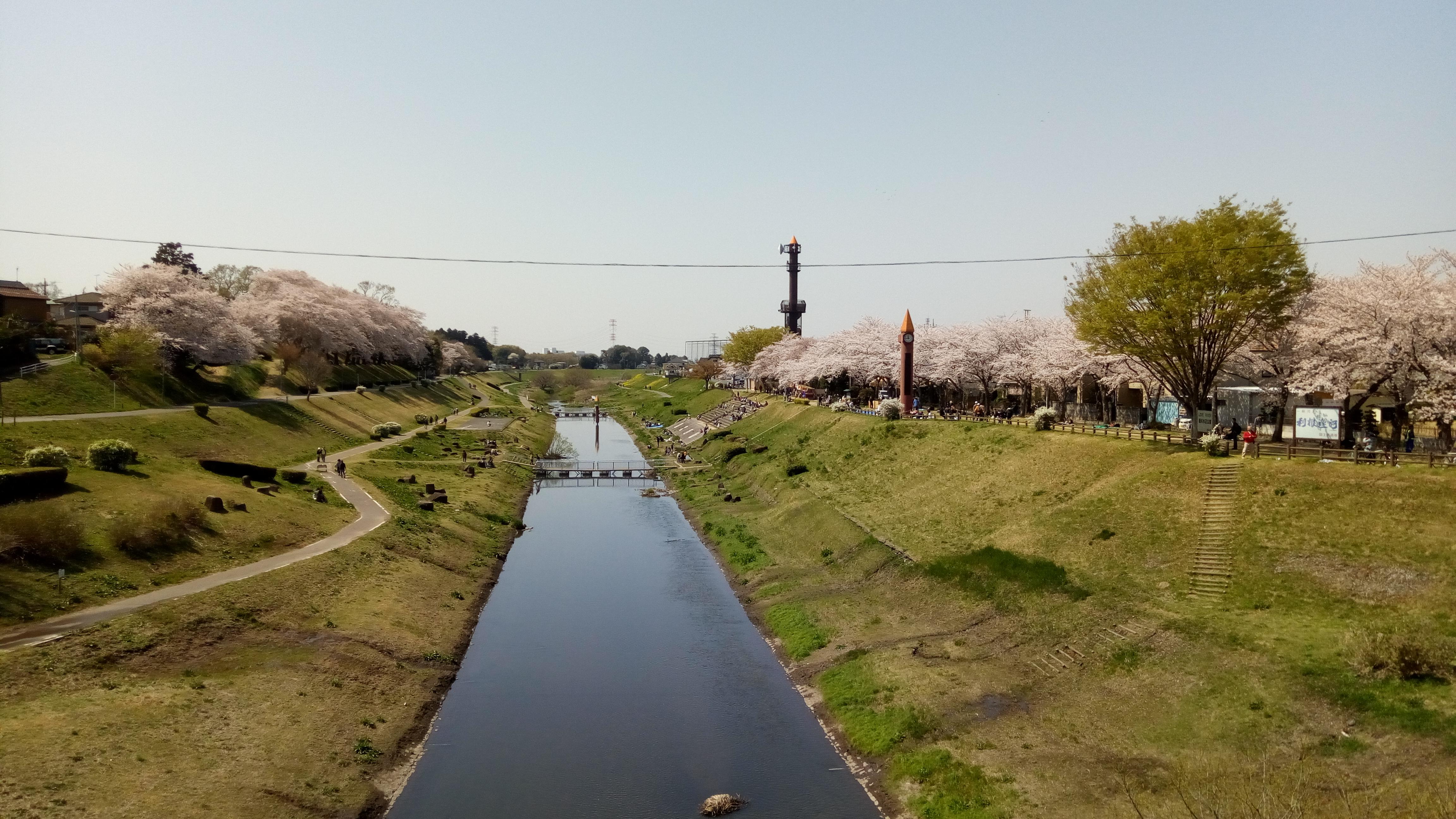 満開の桜を堪能~運河水辺公園