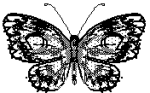 public domain image of a butterfly
