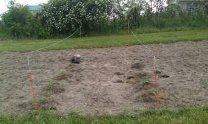 Wittekind garden on May 6, 2012