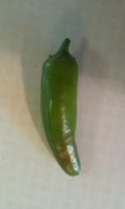 jalapeno pepper from garden