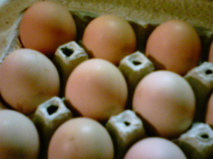 brown eggs from the Wittekind homestead