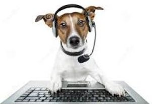 contact us jack russell dog dispatcher