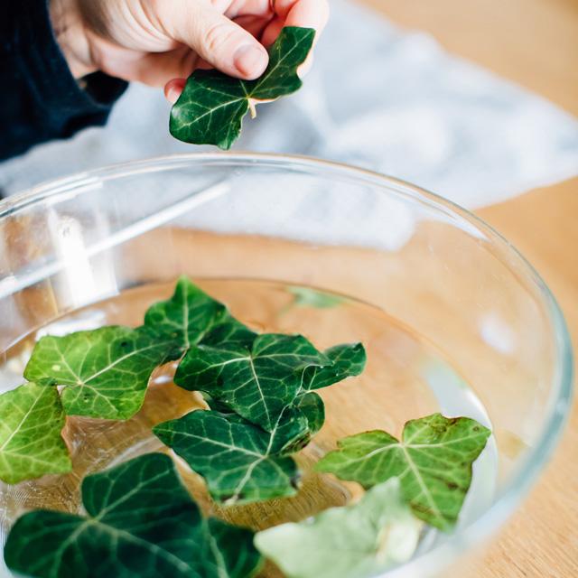 Rinçage des feuilles pour la lessive au lierre