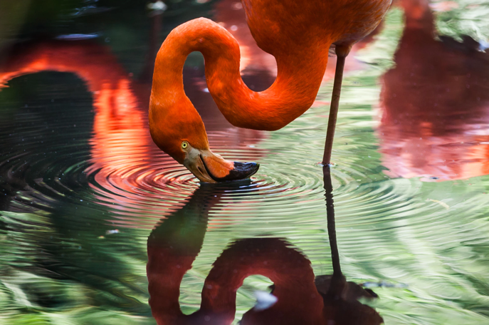 Flamingo Library of All Blogs