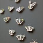 Clairebrewster Apocalpseofbutterflies Thumb