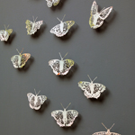Clairebrewster Apocalpseofbutterflies Thumb