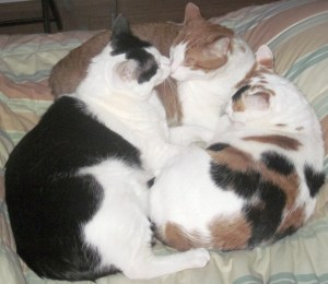Cat pile of the day!