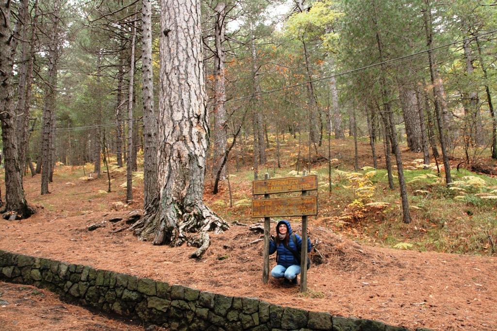 donna sotto albero durante un'escursione sull'etna con bambini