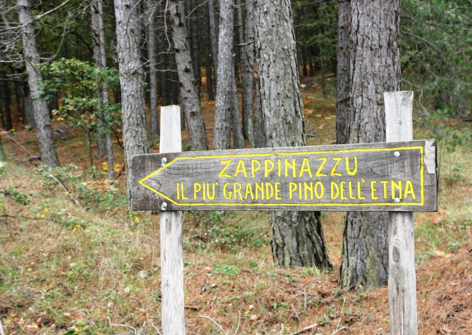 indicazione per lo zappinazzu pino secolare dell'etna
