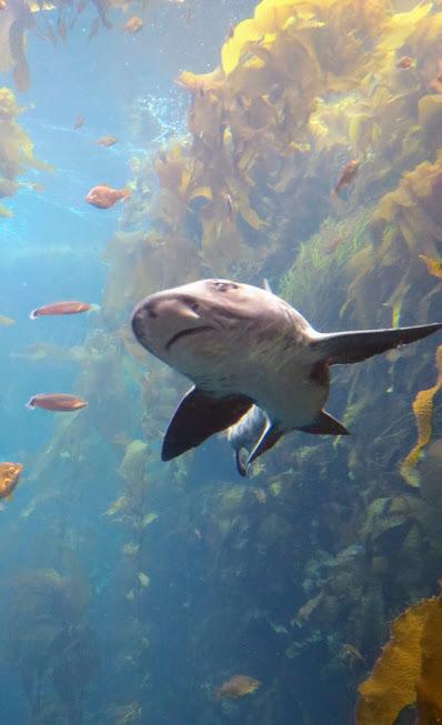 squalo al monterey bay