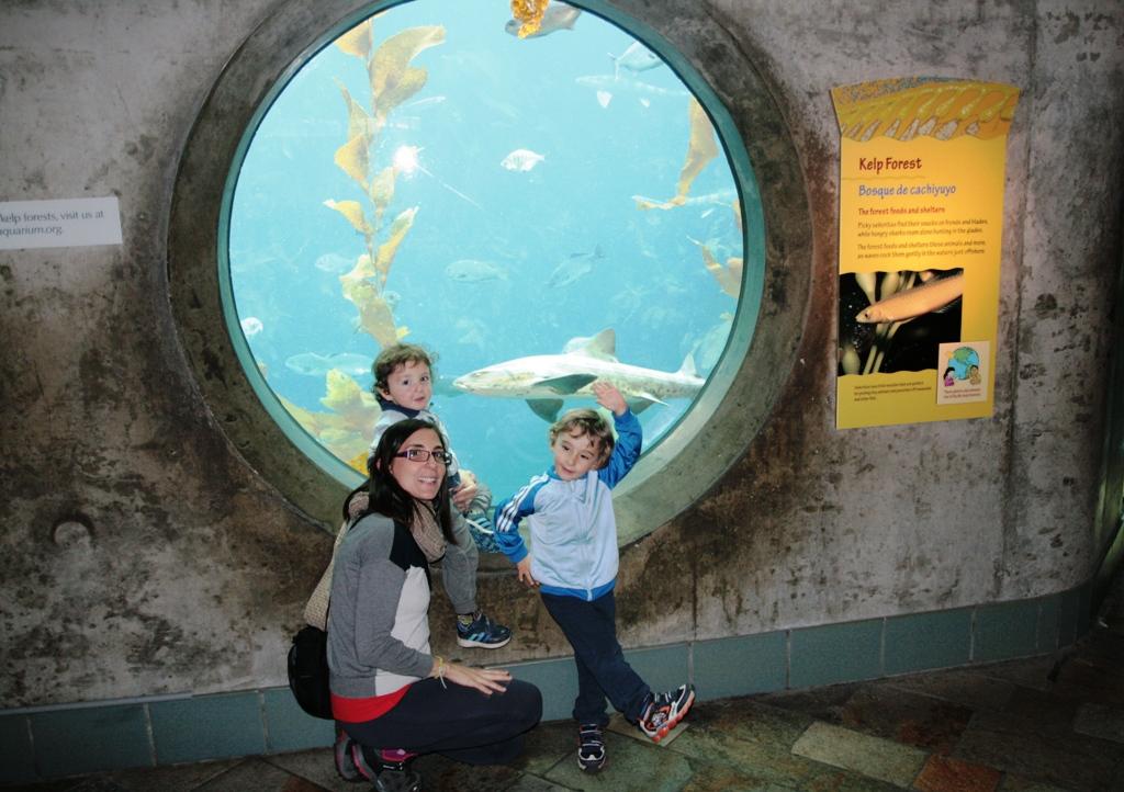 bambini in California che osservano uno squalo all'acquario di monterey