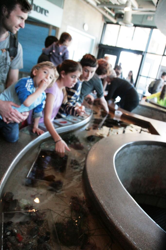 bambino che gioca all'acquario di monterey in california