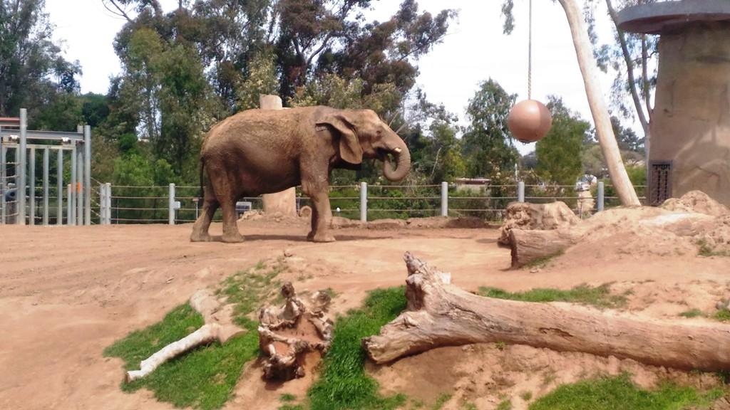 elefante allo zoo di San Diego