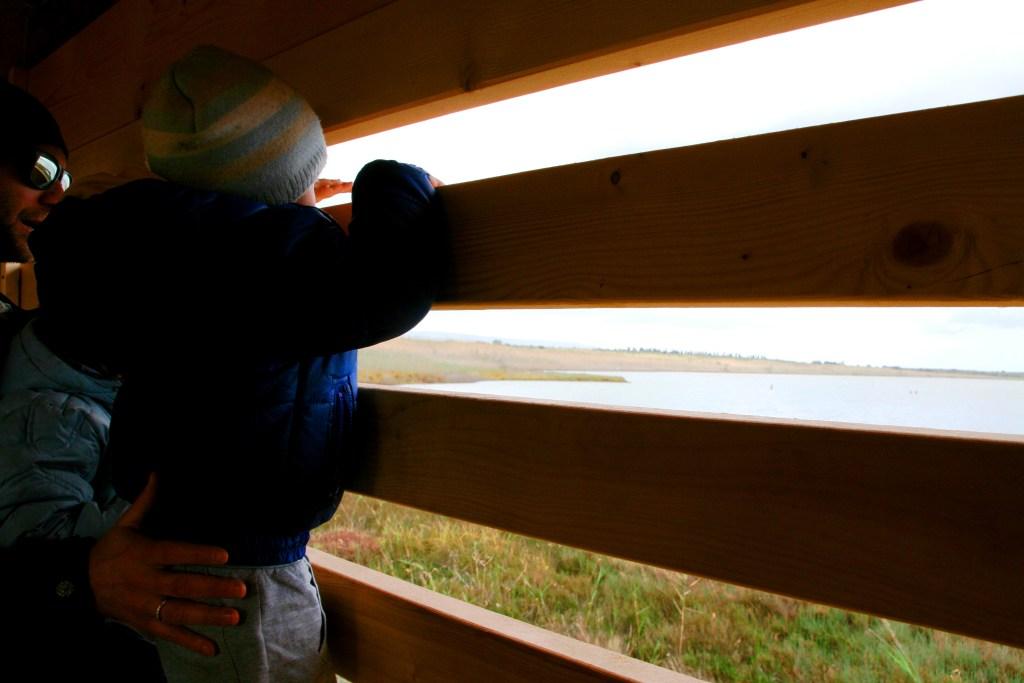 un bambino che osserva i fenicotteri in Sicilia