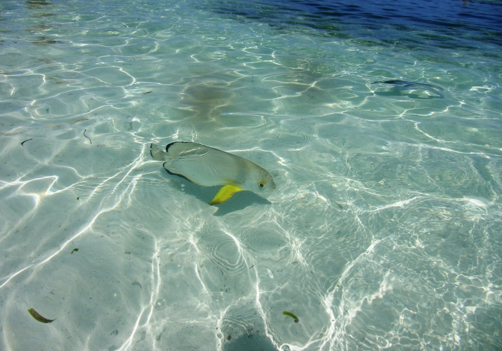 un pesce tropicale alle seychelles