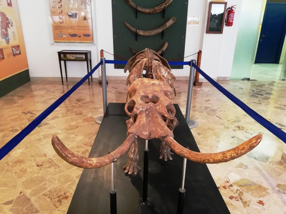 Una giornata al Museo Geologico Gemmellaro di Palermo