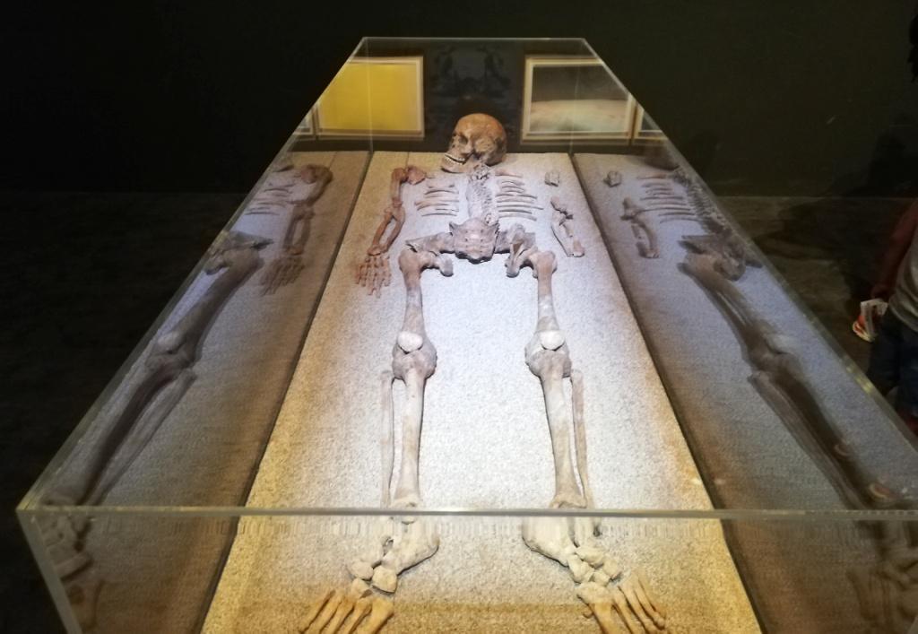 scheletro al museo geologico gemmellaro