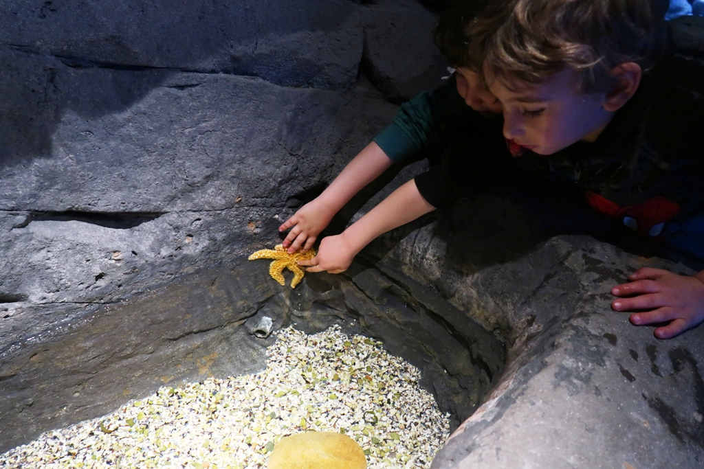 bambini che toccano una stella marina all'acquario di Siviglia