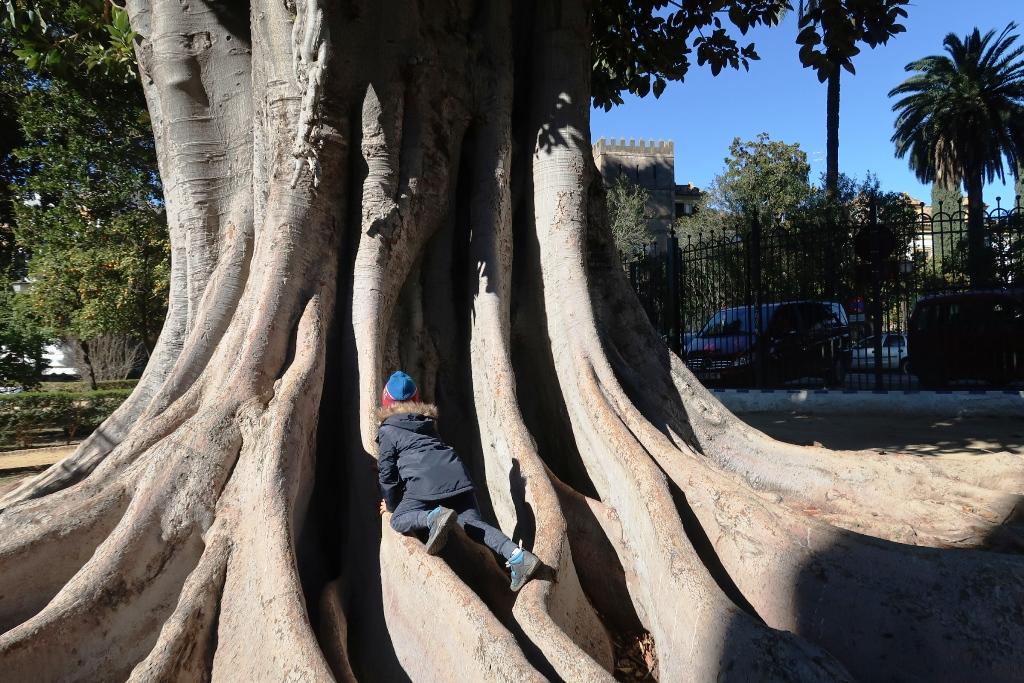 bambino che si arrampica su un albero