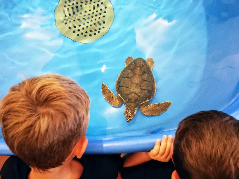 bambini che guardano una tartaruga a Favignana