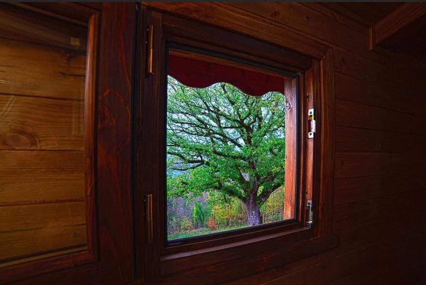 vista dalla casetta sull'albero in Calabria