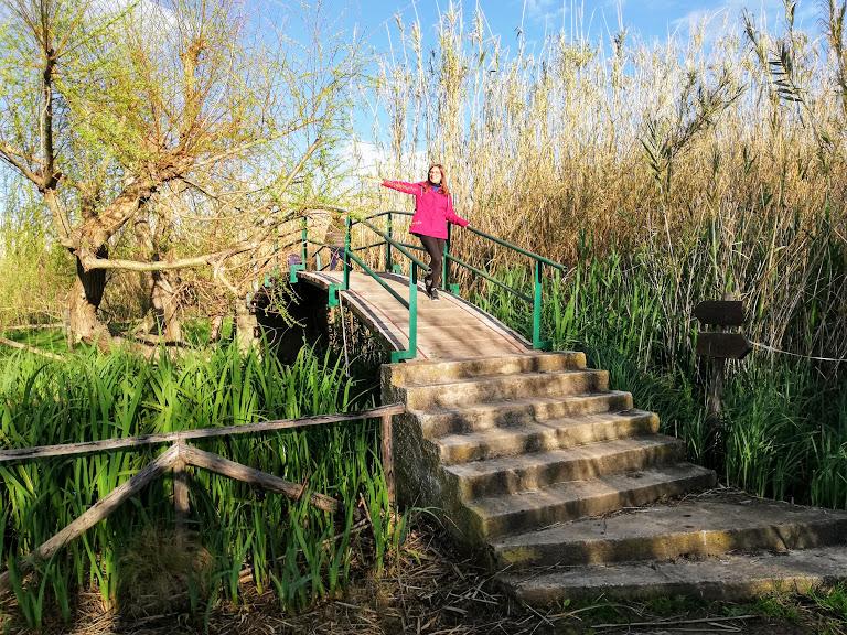 ponte lungo il sentiero della riserva della fonte ciane nei dintorni di Siracusa