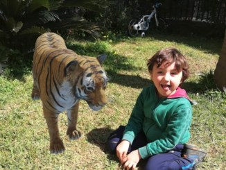 animali in 3D con google, una tigre in giardino