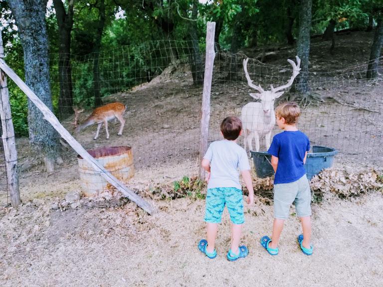 bambini che osservano un daino sui Nebrodi