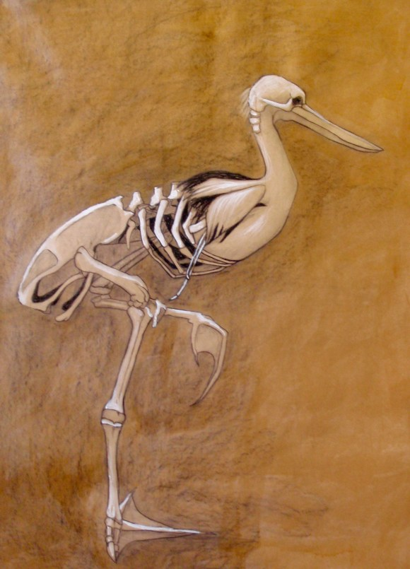 """Claire Marsh, 2010, """"skeleton composition"""", conte, charcoal and shellac on butcher paper"""