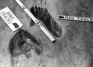 Traces de pas humains à côté de traces de dinosaures.