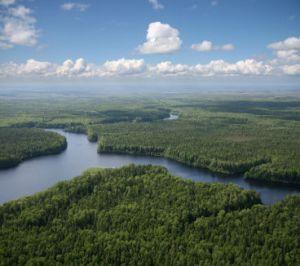 foret boreale photo A