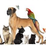 Conseils : Bien choisir son animal de compagnie