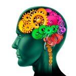 Zoom sur les neurotransmetteurs de notre cerveau