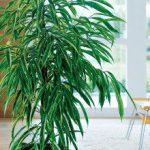 Glossaire : Plantes