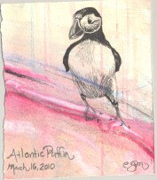 2010.3.16.Atlantic.Puffin