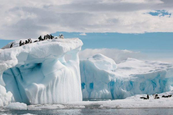 Brown Bluff, Antarctica, Ade?lie penguins on ice, 7703, Denis Elterman